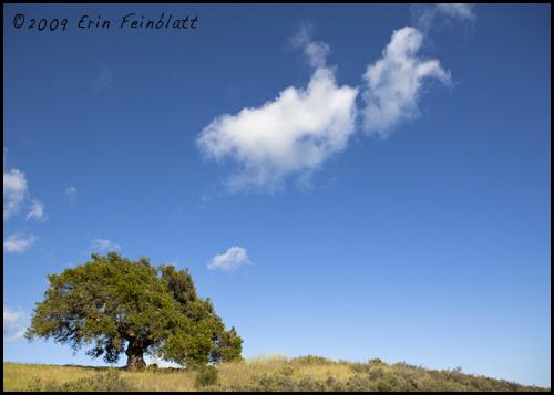 ©2009 Erin  Feinblatt